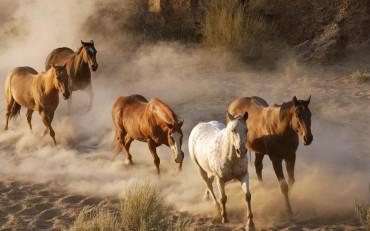 дикие лошади сша