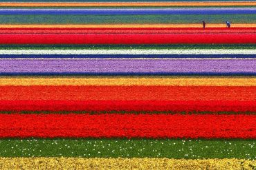 Сезонная работа в Голландии