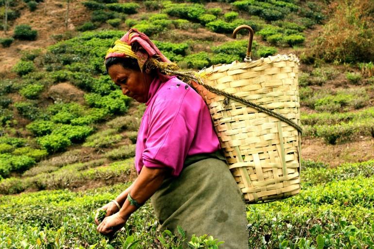 волонтером на кофейные плантации