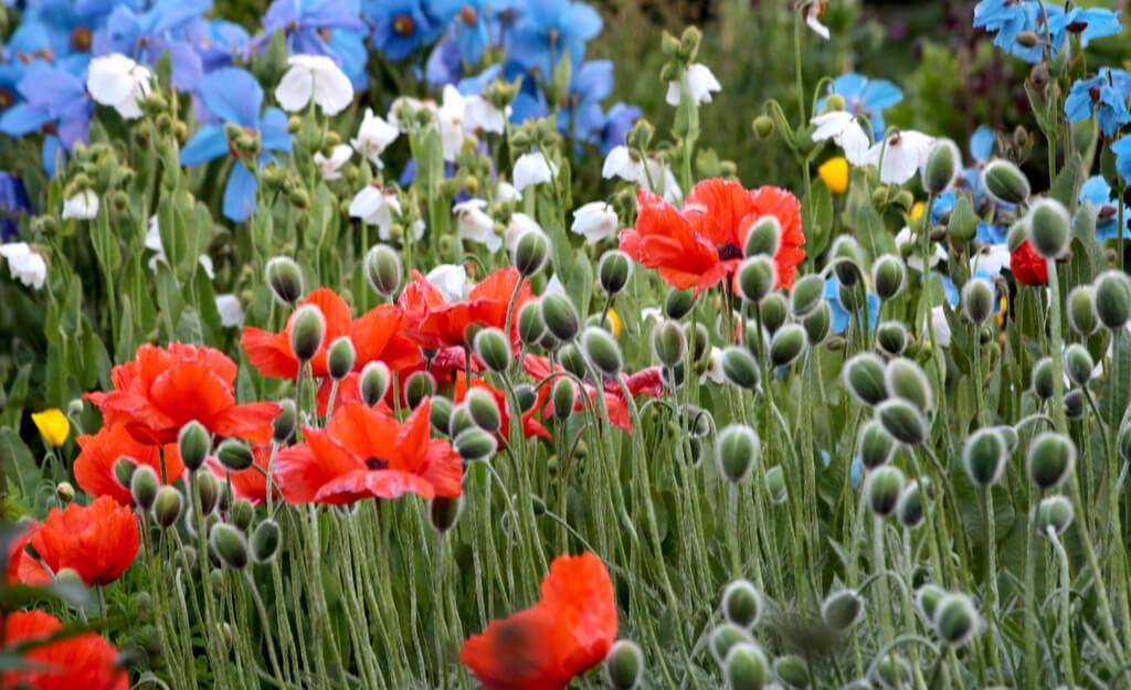 Волонтерство в ботаническом саду