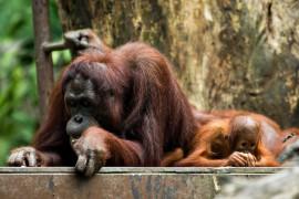 Волонтерство в Центре реабилитации диких животных в ЮАР