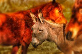 Волонтером на карнавал ослов в Испании