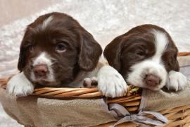 Волонтером в приют для животных в Бельгии