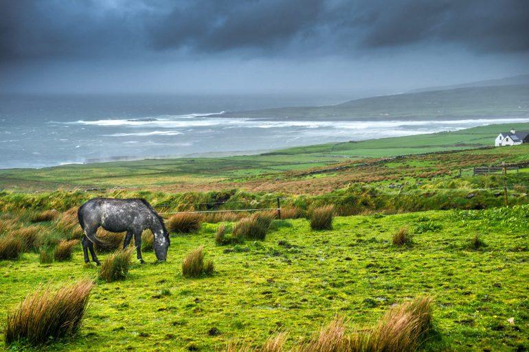 Волонтерство в Ирландии в охотничьем поместье