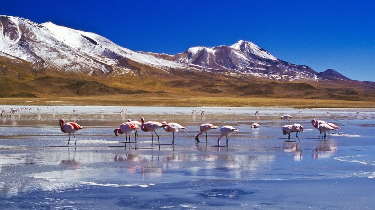 Между Россией и Боливией будет введен безвизовый режим