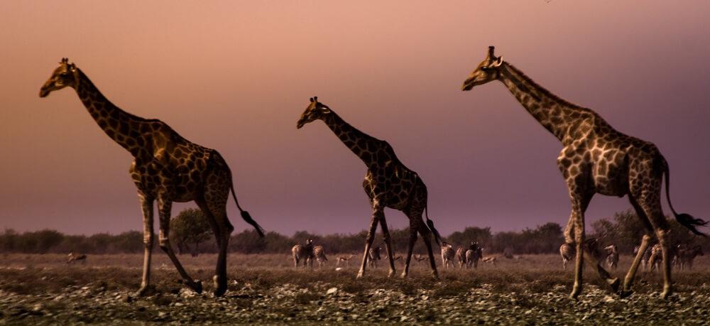 Национальный парк в Намибии