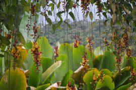 В тропические леса Эквадора