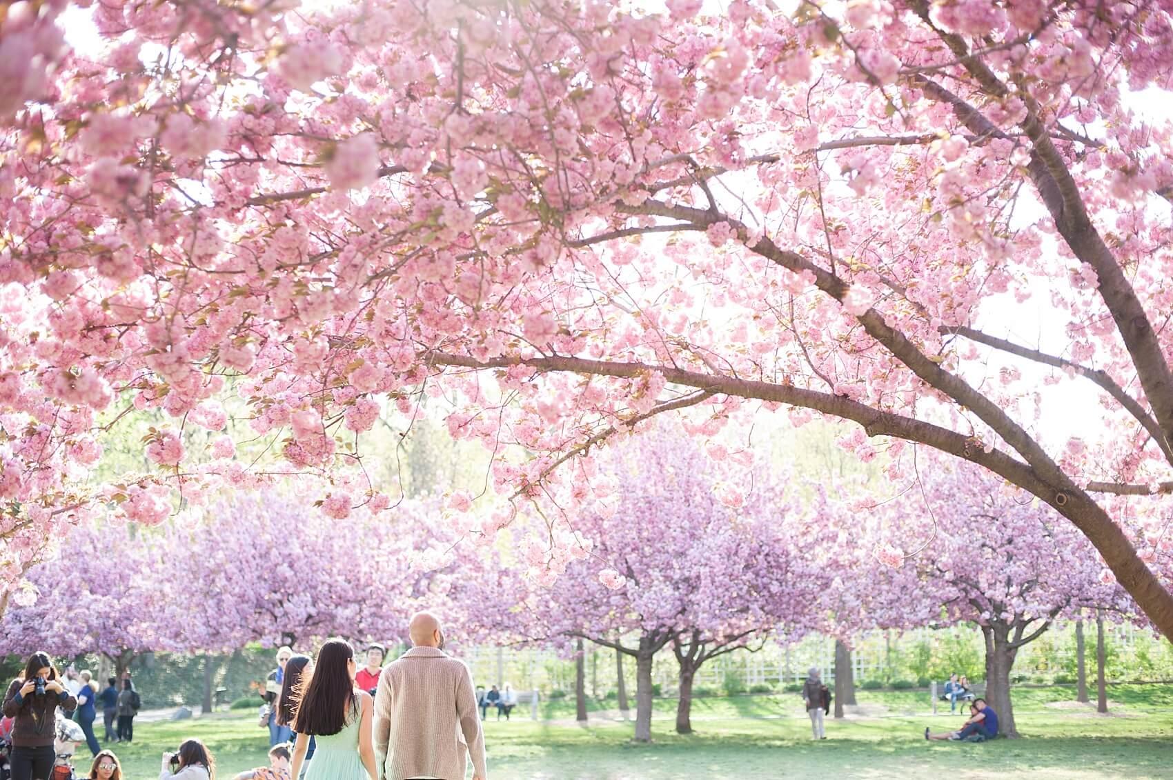 Бруклинский ботанический сад