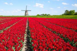 Бесплатное образование в Нидерландах