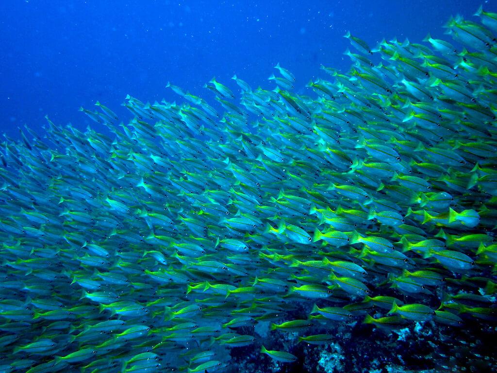 Дайвинг у Симиланских островов